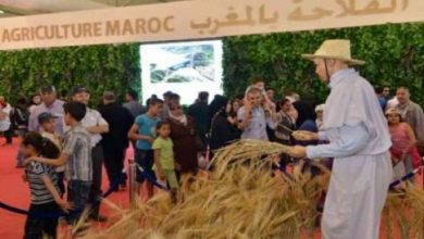 Photo of 850 ألف شخص زاروا معرض الفلاحة في مكناس والمنتجات المحلية نجم الدورة