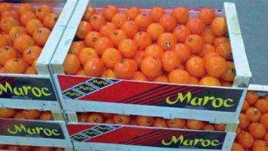 Photo of الأوروبيون يتحالفون ضد الطماطم المغربية
