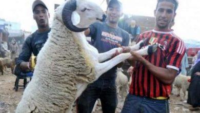 Photo of رسميا: عيد الأضحى بالمغرب يوافق 5 شتنبر الجاري