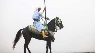 Photo of الدورة السابعة لمعرض الفرس بالجديدة تحطّم رقما قياسيا جديدا
