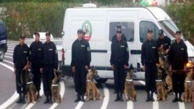 "Photo of مواطن اسباني يحاول تمويه الكلاب البوليسية بمطار محمد الخامس باستعماله ""الابزار"""