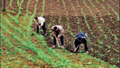 Photo of الأراضي السلالية تثير الجدل بإقليم تاونات ومطالبة عامل الإقليم بفتح تحقيق في الموضوع