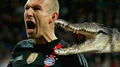Photo of تصريح غريب من روبن: تعرضت لعضة تمساح في قطر