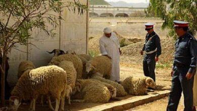 Photo of إطلاق النار في عملية سرقة 37 خروفا بحد السوالم